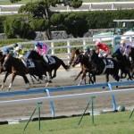 競走馬の寿命は何年?普通の馬より短いの?