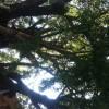 博多祇園山笠って何?気になる歴史と見所の櫛田入り日程は?