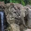 急げ!上野動物園が夜間オープンを一週間だけ実施?!日程や時間は?